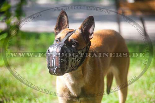 Belgian Malinois leather dog muzzle buy