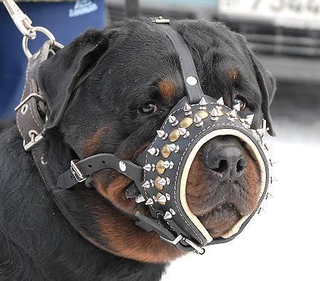 Rottweiler Edler Hundemaulkorb aus Leder mit Spikes M61