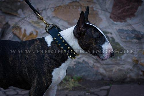 Breites Hundehalsabnd für große Hunde