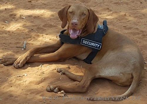 Bestseller Geschirr für Hundeaktivitäten   Geschirr Nylon Universell