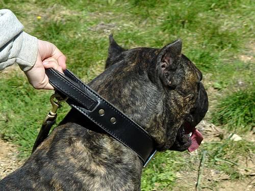 Leder Halsband für Cane Corso zweischichtig
