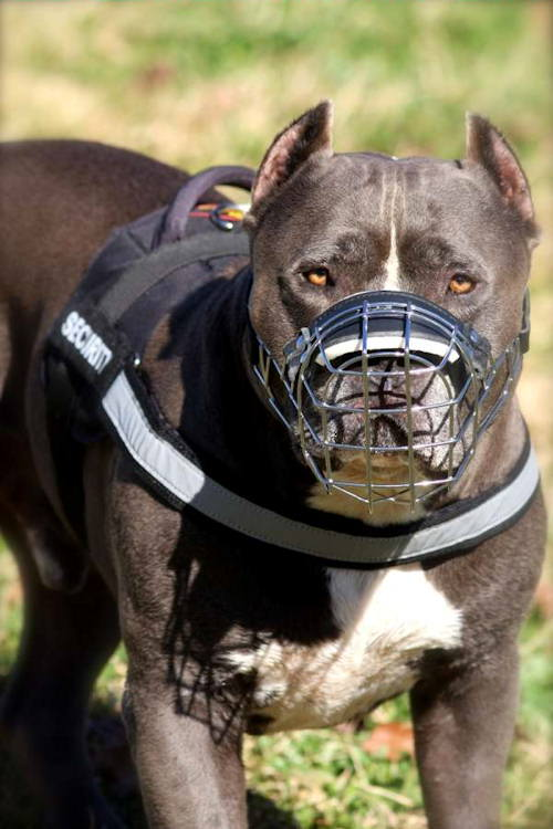 Best Dogs To Train Off Leash
