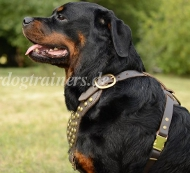 Rottweiler Studded Walking Dog Leather Harness