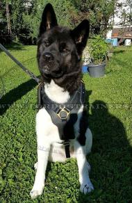 Leder Hundegeschirr für Akira Inu, praktisch und schön