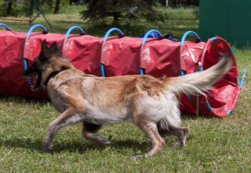hundesport und trainings