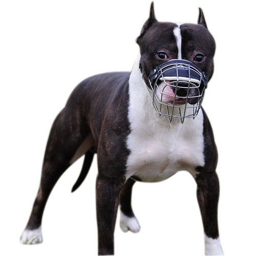 Best wire dog muzzle perfect for Amstaff