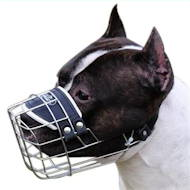 /images/new-pitbull-wire-dog-muzzle.jpg