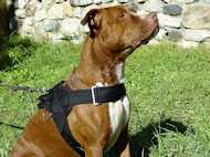 /images/nylon-dog-harness-pitt-bull.jpg
