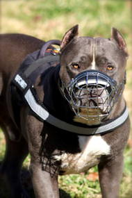 /images/pitbull-geschirr-nylon-harness-de.jpg