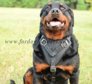 Agitation Leather Dog Harness for Rottweiler