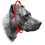 Hund fuer Halsband abmessen