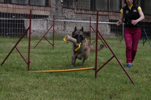 vorbereitung des hundes zum wettkampf