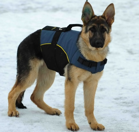 多目的で、全天候のナイロンの犬用ハーネス