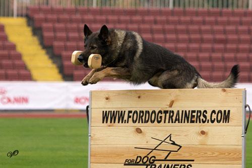 sport und hunde
